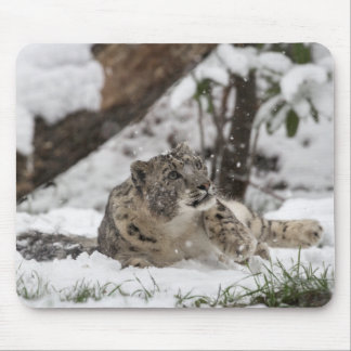 Curious Snow Leopard in Snow Mouse Pad