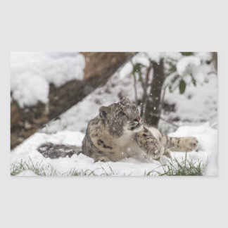 Curious Snow Leopard in Snow Sticker