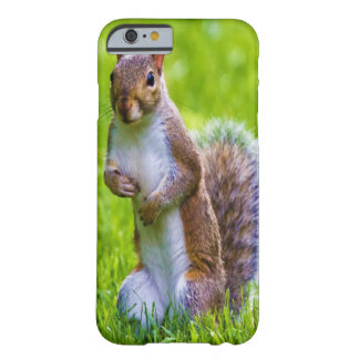 Curious Squirrel Barely There iPhone 6 Case