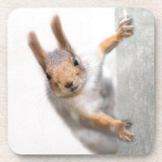 Curious squirrel drink coasters
