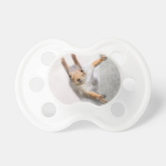 Curious squirrel pacifier