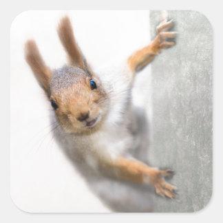 Curious squirrel square sticker