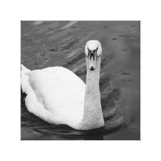Curious swan canvas print