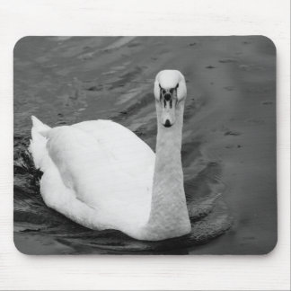 Curious swan mouse pad