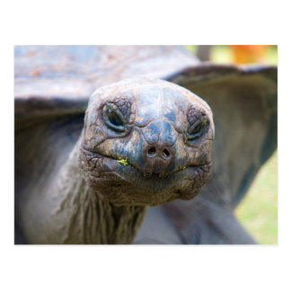 Curious turtle postcard