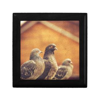 Curious Urban Pigeons Retro 2 Trinket Box