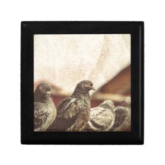 Curious Urban Pigeons Retro 3 Trinket Box