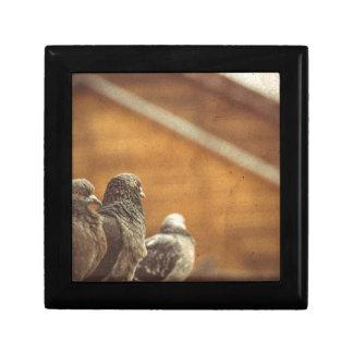Curious Urban Pigeons Retro 4 Jewelry Box