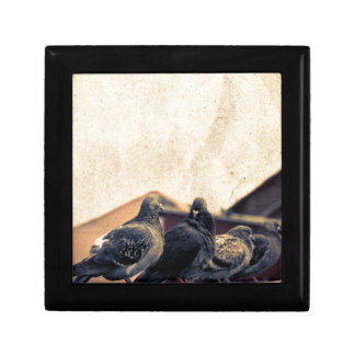 Curious Urban Pigeons Retro Gift Boxes