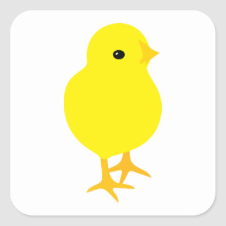 Curious Yellow Chick Square Sticker