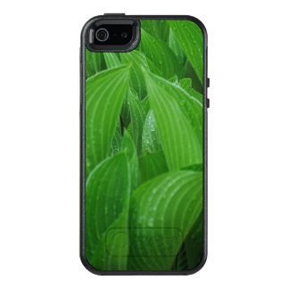 Curled Hosta Leaves with Raindrops OtterBox iPhone 5/5s/SE Case