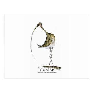 Curlew bird, tony fernandes postcard
