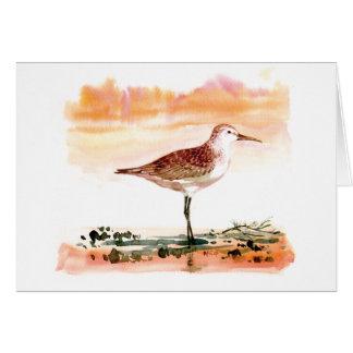 curlew sandpiper card