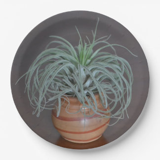 Curly Air Plant 9 Inch Paper Plate
