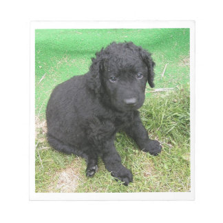 curly coated retriever puppy notepad