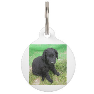 curly coated retriever puppy pet ID tag