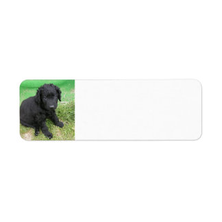 curly coated retriever puppy return address label