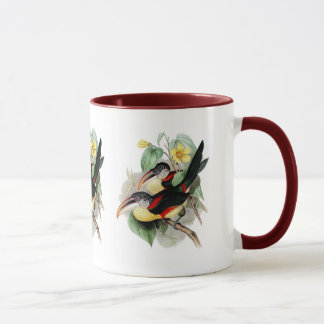 Curly-crested Aracari Mug