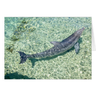 Curved Dolphin Underwater Plain customized Card