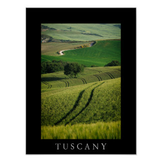 Curvy lines in green Tuscany black poster