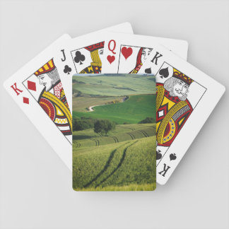 Curvy lines in green Tuscany poker deck