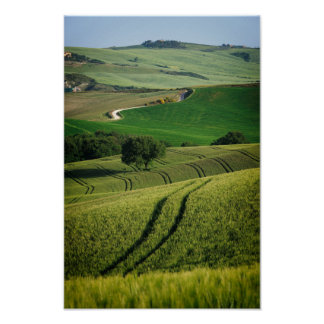 Curvy lines in green Tuscany poster