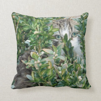 cushion cat boxwood
