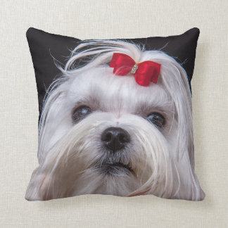 Cushion of maltese dog small white toy dog
