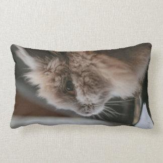 Cushion - Pancake