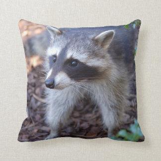 Cushion raccoon Racoon