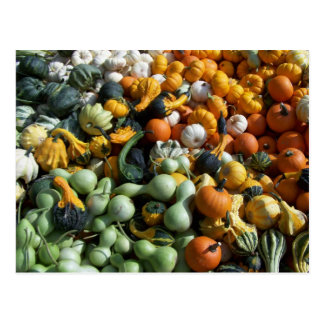 Custom Autumn Fall Colorful Gourds Postcard