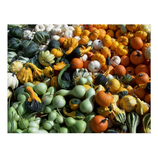 Custom Autumn Fall Colourful Gourds Postcard