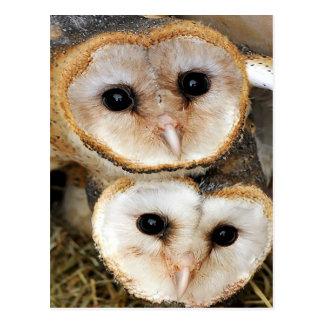 Custom baby barn owls postcard