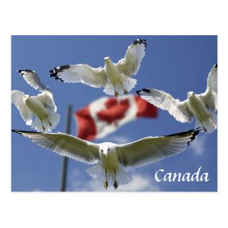Custom Canada Flag seagulls Post card