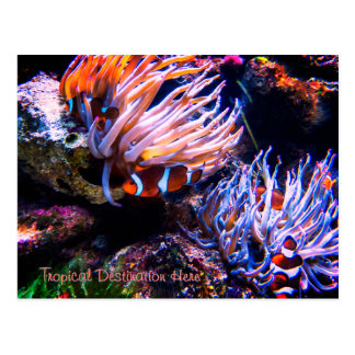 Custom Clownfish Destination Postcard