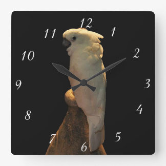 Custom cockatoo bird posing in the night square wall clock