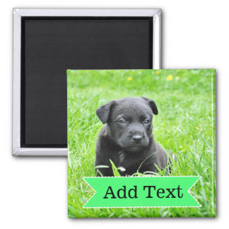 Custom Family Pet  Photo and Name Picture Magnet