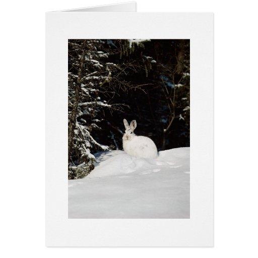 Custom Holiday Greeting Card  Wild Rabbit In Snow