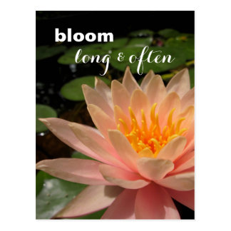 Custom Water Lily Postcard
