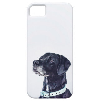 Customizable Black Labrador Retriever iPhone 5 Covers