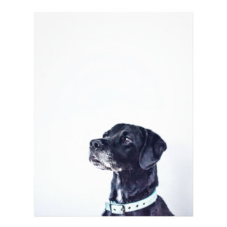 Customizable Black Labrador Retriever Letterhead