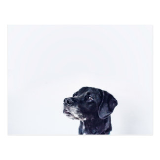 Customizable Black Labrador Retriever Postcard