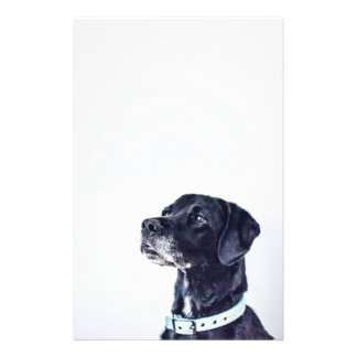 Customizable Black Labrador Retriever Stationery