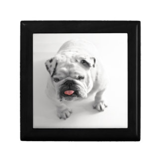 Customizable Bulldog Gift Box