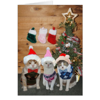 Customizable Christmas Cats/Kitties Argyle Sweater Card