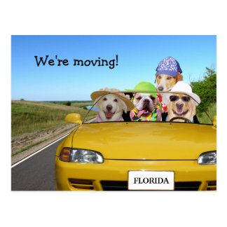 Customizable Funny Dogs We're Moving Postcard