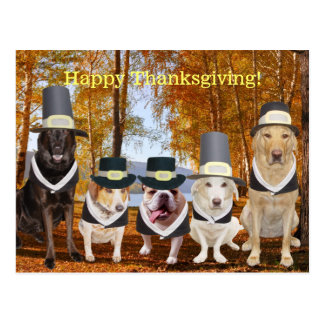 Customizable Funny Pilgrim Dogs Thanksgiving Post Postcard