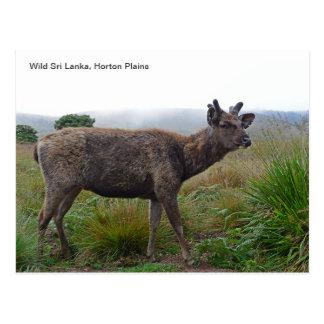 Customizable Postcard featuring a Sambar Deer