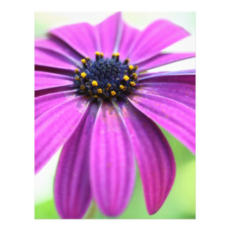 Customizable Purple Daisy Flyer
