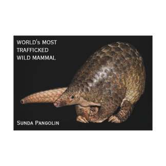Customizable Sunda Pangolin Canvas Print